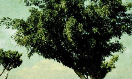 Een geweer, een koe, een boom en een vrouw – Meir Shalev