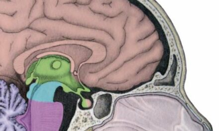 Wij zijn ons brein – Dick Swaab