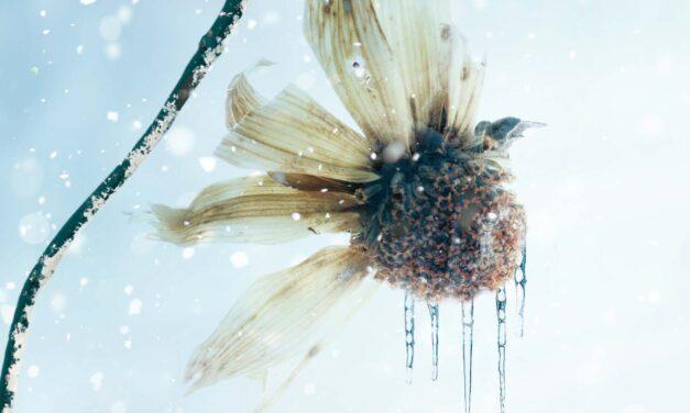 Boven water – Arnaldur Indridason