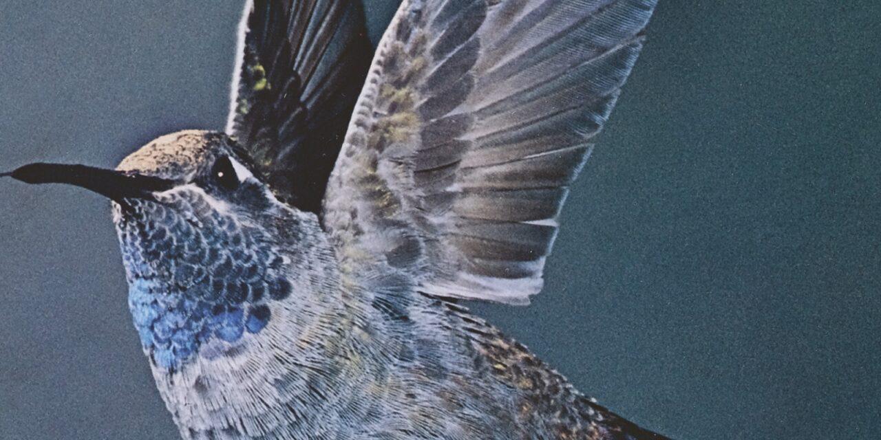 De kolibrie – Sandro Veronesi