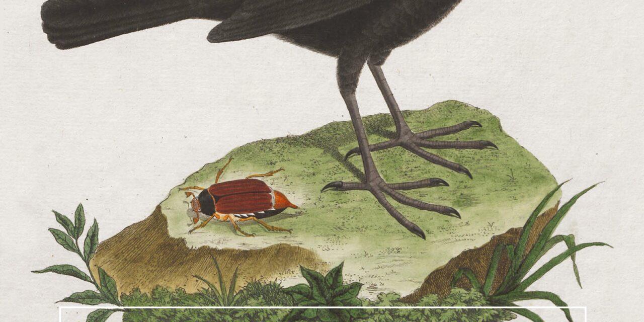 Vogelzang in tijden van stilte – Steven Lovatt