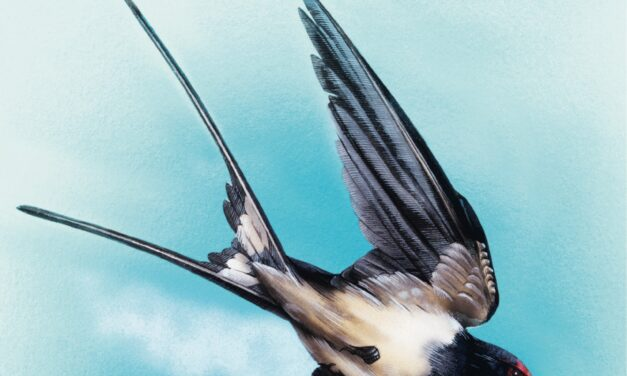 De zwaluw – Stephen Moss