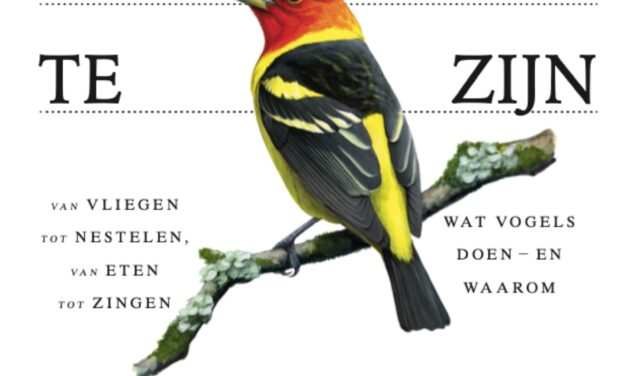 Hoe het is om een vogel te zijn – David Allen Sibley